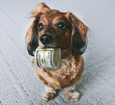 My Dog Ate My Wallet Spot Speaks